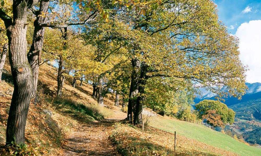 Herbst im Eisacktal: Wandern Sie auf dem Kastanienweg