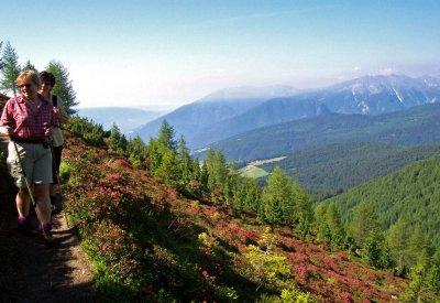 Frühlingswandern mit Alpenrosen