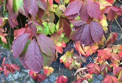 Herbst-Eisacktal07