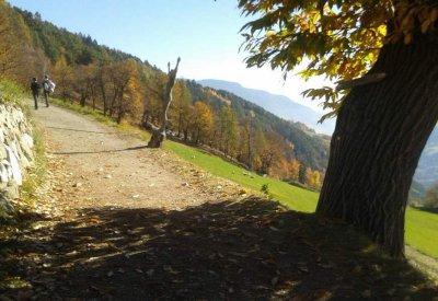 Herbst im Eisacktal - Kastanienweg 4
