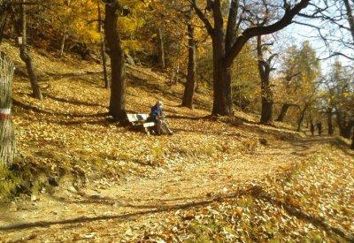 Herbst im Eisacktal - Kastanienweg 8